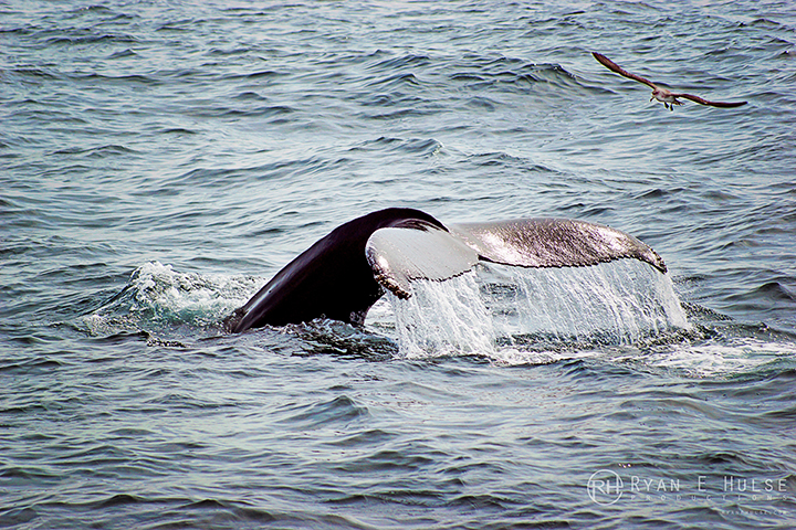 cape ann whale watch gloucester ma